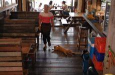 【海外の反応】レストランを公然と営業妨害する猫