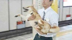 【海外の反応】「日本のシバイヌ地下鉄侵入騒動」に対する海外の反応