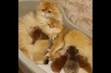 「これは負けたわ…」人もうらやむほど幸せそうなネコ家族