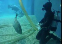 飼育員に甘える水族館のお魚