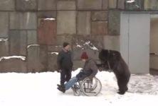 【海外の反応】重傷を負って入院していた調教師、クマに付き添われて退院する