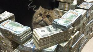 「ミリオンダラー・ケージ」世界一お金持ちなプレイボーイの飼い猫