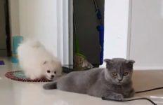 【海外の反応】犬の迷惑行為を耐え忍ぶ猫