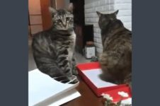 【海外の反応】犬派の皆様にもご覧いただきたい「何を考えているのか分かりやすい猫」