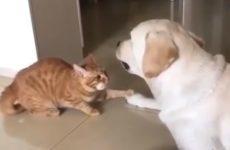 【海外の反応】「僕たち、まだ友達だよね?」犬の気持ちを確かめる猫